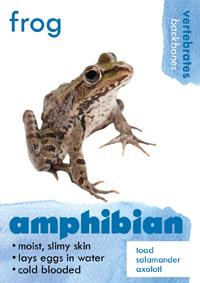 amphibian thumbnail