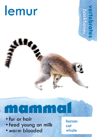 mammal thumbnail